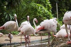 Flamingo birds Stock Images