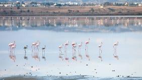 Flamingo birds Stock Photos