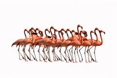 Flamingo birds isolated on white background Stock Photography