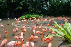 Flamingo birds Royalty Free Stock Photo