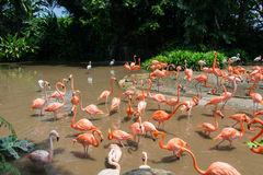 Flamingo birds Stock Photo