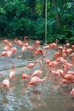 Flamingo birds Stock Photos