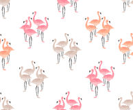Flamingo Birds Seamless Pattern Stock Images