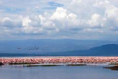 Flamingo birds sitting in a lake. Flamingo birds sitting in lake Baringo, Kenia Royalty Free Stock Images