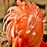 Flamingo, Birds, Water Bird Stock Photos