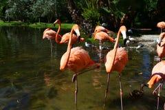 Flamingo buddies Lizenzfreie Stockbilder