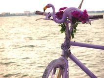 Flamingo on a bycicle. Florida,Tampa Stock Image