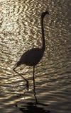 Flamingo in Camargue, Frankrijk Stock Afbeeldingen