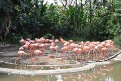 Flamingo cor-de-rosa dentro de um jardim zoológico Foto de Stock Royalty Free