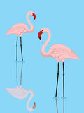 Flamingo couple Royalty Free Stock Photography