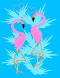 Flamingo couple Royalty Free Stock Images