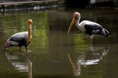 Flamingo_couple Lizenzfreie Stockbilder