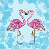 Flamingo couple.  and blue background Royalty Free Stock Image