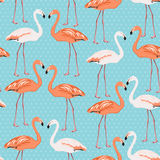 Flamingo couple seamless pattern on blue polka dot Royalty Free Stock Photography