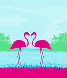 Flamingo couple in wild landscape Stock Images