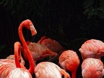 Flamingo, der heraus von der Menge steht Lizenzfreies Stockbild