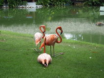 Flamingo ` die s op het gras rusten Royalty-vrije Stock Foto