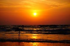Flamingo durante o tempo do por do sol na praia Fotos de Stock
