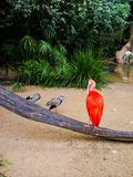 Flamingo e pássaros ao lado de uma lagoa imagem de stock
