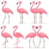 Flamingo, een reeks roze flamingo's Royalty-vrije Stock Foto's