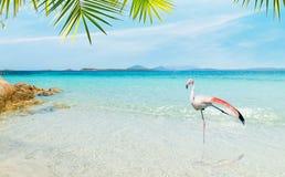 Flamingo in een tropisch strand royalty-vrije stock foto