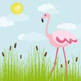 Flamingo em um glade Ilustração Royalty Free