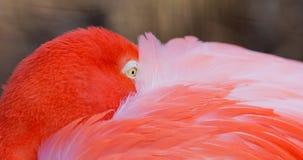 Flamingo eye Royalty Free Stock Photography