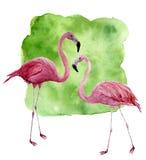 Flamingo för vattenfärg två Räcka den målade rosa fågelillustrationen med grön bakgrund som isoleras på vit bakgrund vektor illustrationer