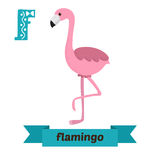 Flamingo. F letter. Cute children animal alphabet in vector. Fun Royalty Free Stock Images