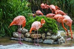 Flamingo family in Lisbon zoo, Portugal Stock Photos