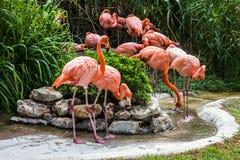 Flamingo family in Lisbon zoo, Portugal.  Stock Photos