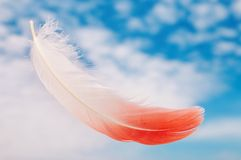 Flamingo feather Stock Photo