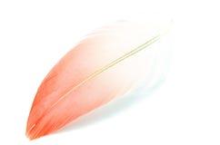Flamingo feather isolated Stock Image