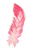 Flamingo feather Stock Images