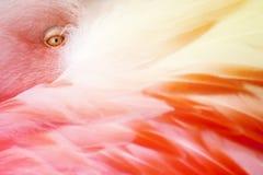 Flamingo Feathers stock photo