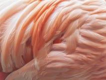 Flamingo Feathers Background Royalty Free Stock Photo