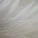 Flamingo feathers Stock Image