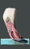 Flamingo feeding detail Stock Photos