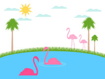 Flamingo floats. Landscape with flamingos, wildlife refuge. Royalty Free Stock Photos
