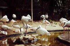 The flamingo flock. stock photos