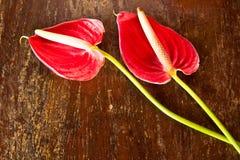 Free Flamingo Flower Stock Photo - 20836100