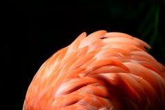 Flamingo Fluff Stock Images