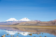 A flamingo fly with the snowcapped volcanoes Parinacota and Pome Royalty Free Stock Photography