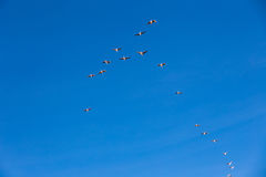 Flamingo flying, Natural Park of Sajama (Bolivia) Royalty Free Stock Photography