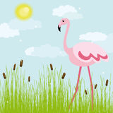 Flamingo on a glade Stock Photos