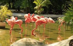 Flamingo at the Grand Mayan Vidanta Riviera Maya. Mexico stock image