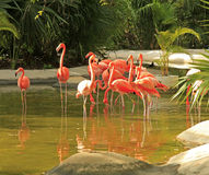 Flamingo at the Grand Mayan Vidanta Riviera Maya Stock Photos
