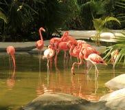 Flamingo at the Grand Mayan Vidanta Riviera Maya. Mexico royalty free stock photography