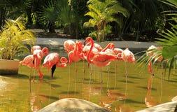 Flamingo at the Grand Mayan Vidanta Riviera Maya. Mexico royalty free stock photos
