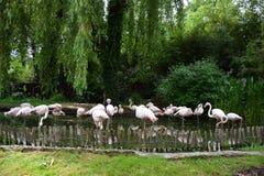 Flamingo Group Royalty Free Stock Image